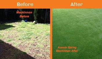 mackinnon before & after xtreme turf work